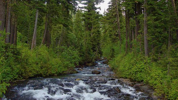 Photo free forest, taiga, trees