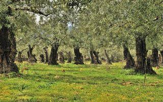 Заставки лес, роща, деревья