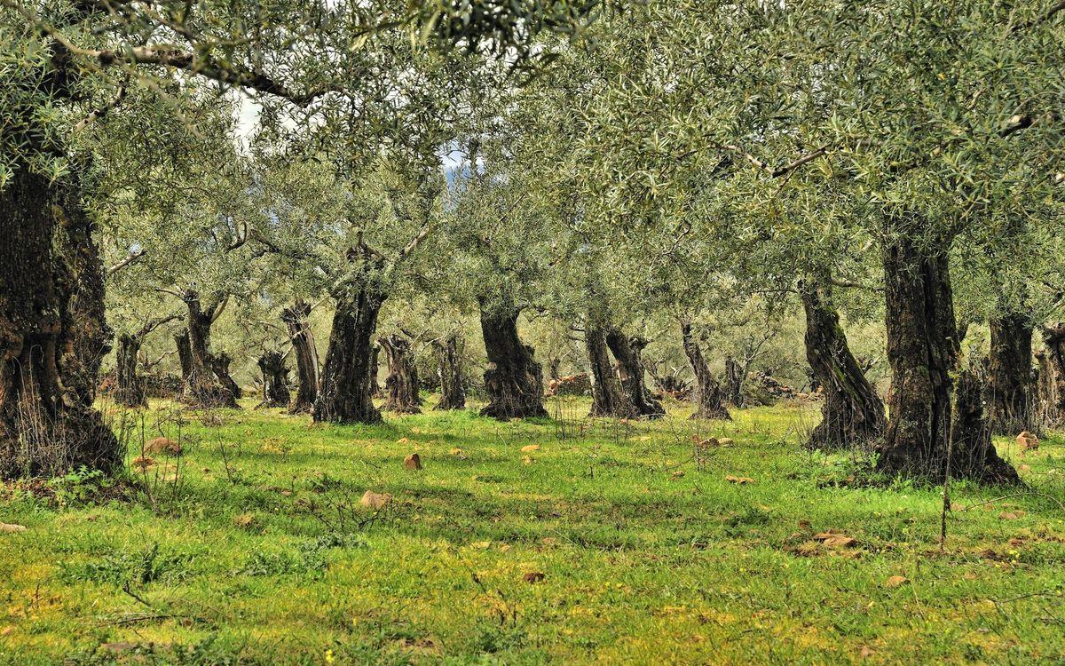 Фото бесплатно лес, роща, деревья, крона, листья, листва, ветки, кора, трава, сад, парк, природа, природа