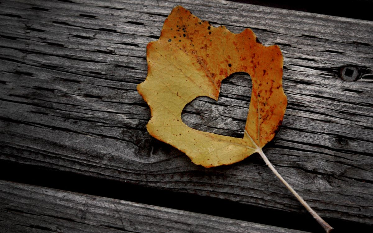 Фото бесплатно листок, осень, листопад, сердце, вырезано, фигура, символ, желтый, холод, природа, природа