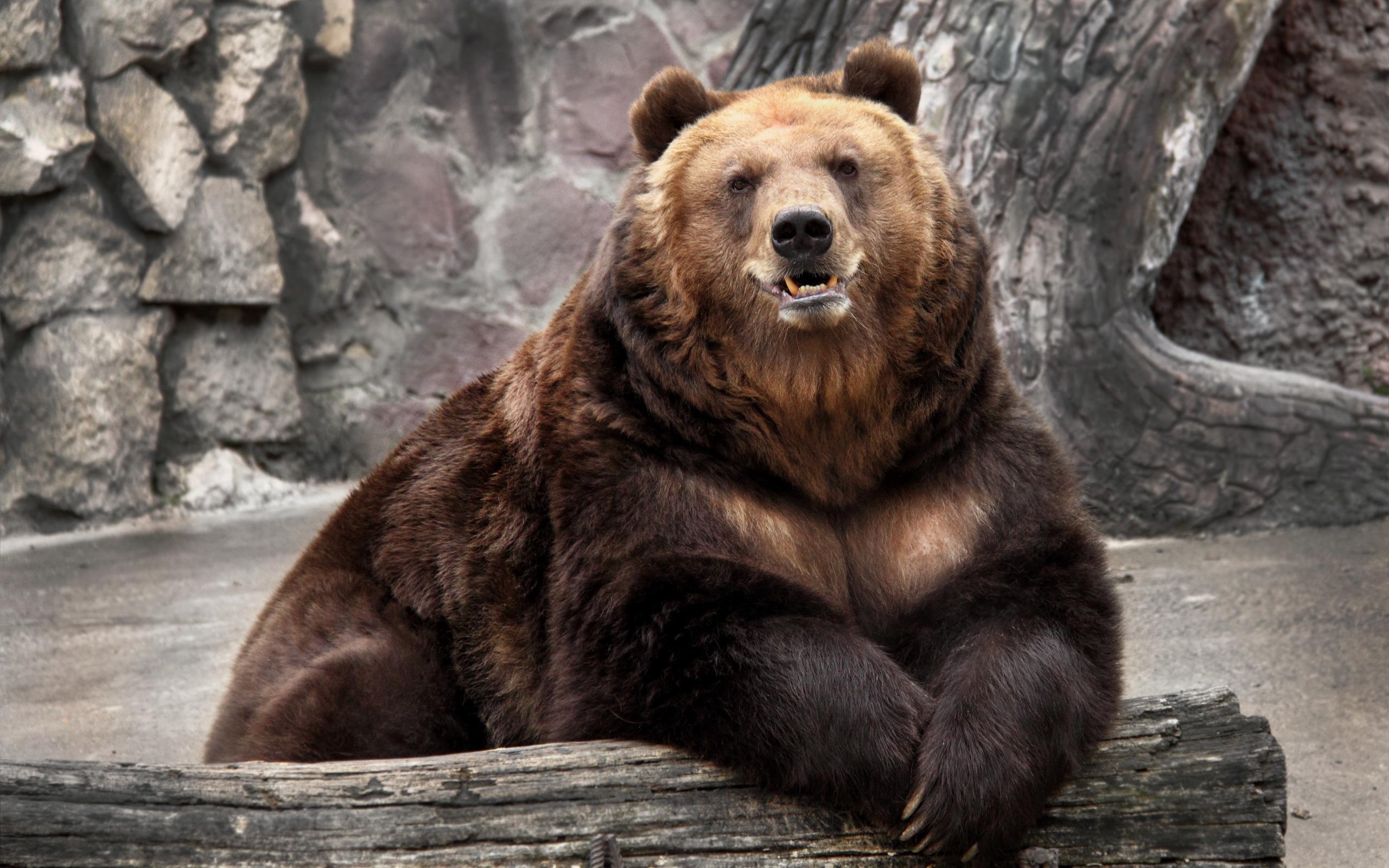 медведь, голова, лапы