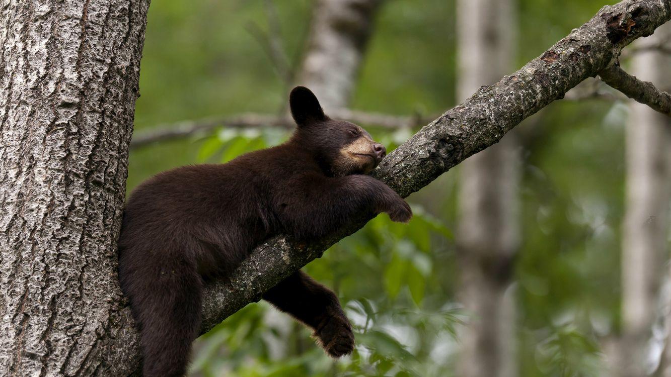 Фото бесплатно медведь, гризли, шерсть - на рабочий стол