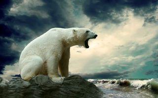 Бесплатные фото медведь,шерсть,лапы,когти,голова,глаза,нос