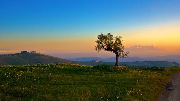 Заставки одинокое дерево,холм