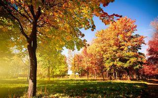 Бесплатные фото осень,листва,деревья,поляна,небо,день,природа