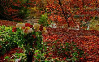 Фото бесплатно осень, цветы, ваза