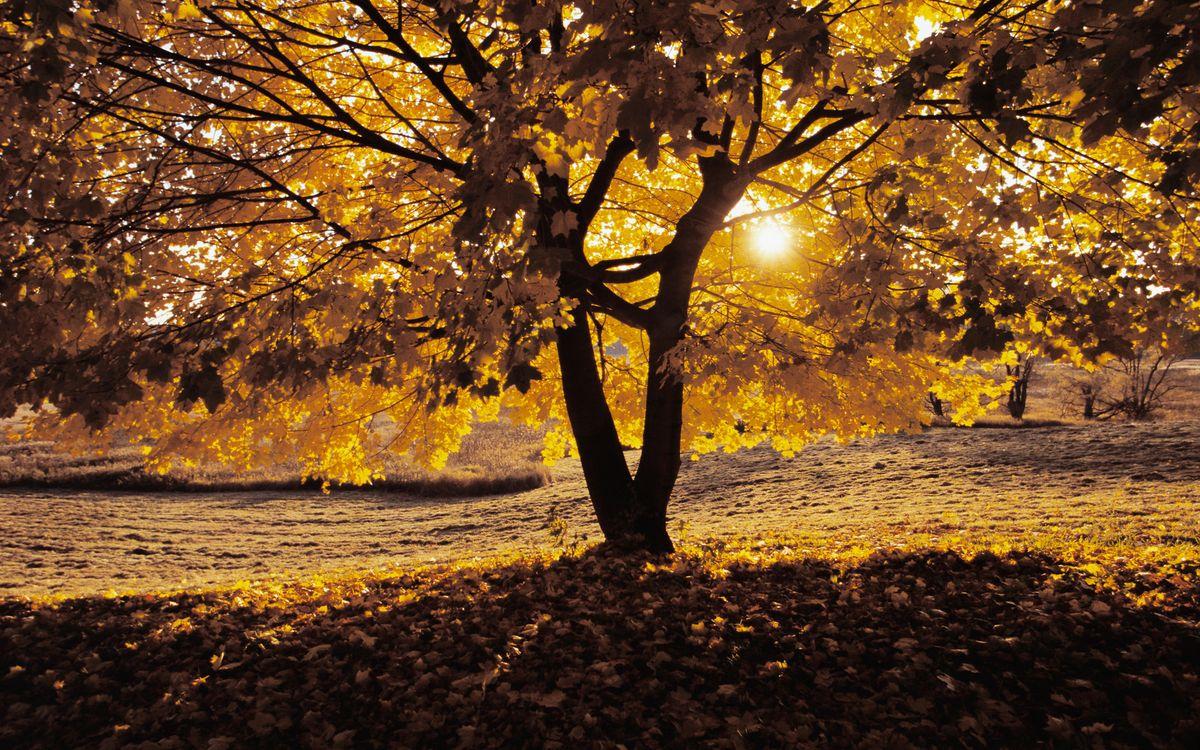 Фото бесплатно осень, листопад, холод, листья, лес, парк, деревья, ветки, кора, крона, солнце, лучи, природа, пейзажи, пейзажи