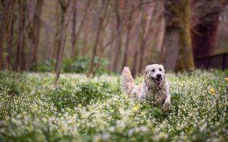 Фото бесплатно пес, морда, шерсть
