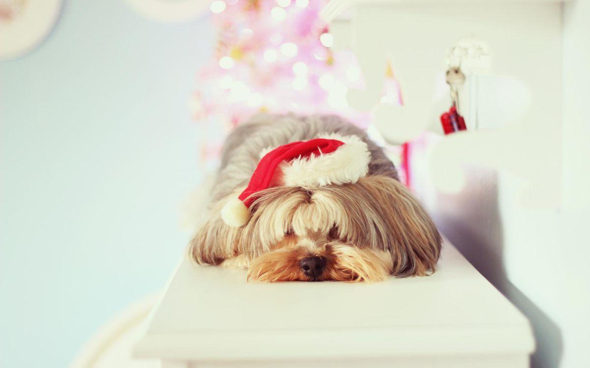 Фото бесплатно пес, новый, год - на рабочий стол