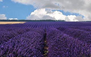 Фото бесплатно поле, цветы, небо