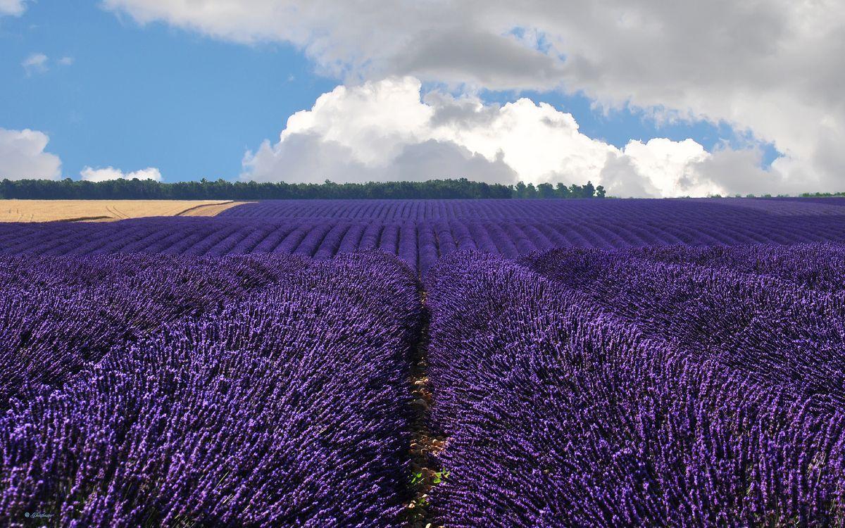 Фото бесплатно поле, цветы, небо - на рабочий стол