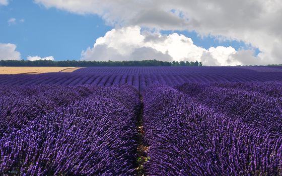 Заставки поле, цветы, небо