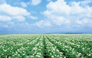 Бесплатные фото поле,цветки,трава,растения,небо,облака,земля