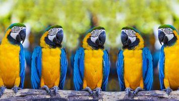 Бесплатные фото попугаи,синий,желтый,клюв,черный,глаза,ветка