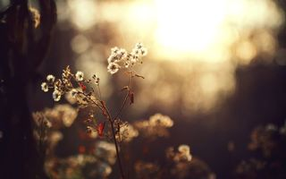 Фото бесплатно растение, листья, ствол