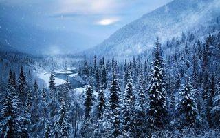 Фото бесплатно снежный лес, река, солнце
