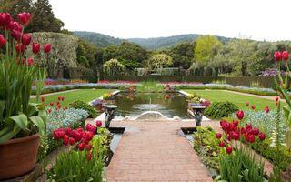 Бесплатные фото цветы,горшки,тюльпаны,дорожка,фонтан,газон,деревья