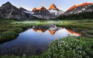 Обои туманное озеро, цветы, горы, снег, растения, лес, природа