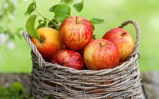 Бесплатные фото яблоки,корзина,урожай,спелые,фрукты,ветки,листья