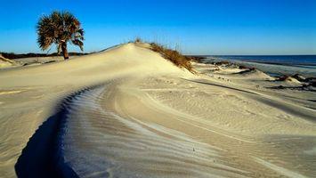 Заставки пляж, пальма, берег