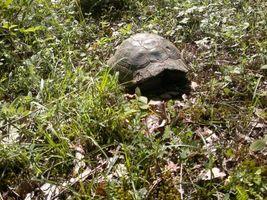 Бесплатные фото черепаха, земля, листья, трава, зелень, засохшие листья, животные