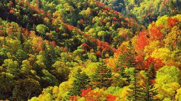 Заставки деревья,лето,лес,ели,листья,высота,природа