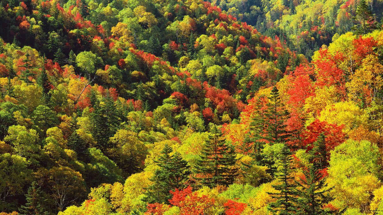 Фото бесплатно деревья, лето, лес, ели, листья, высота, природа, природа