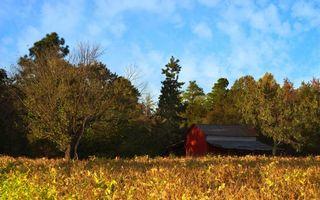 Бесплатные фото домик,деревня,крыша,деревья,листья,трава,огород