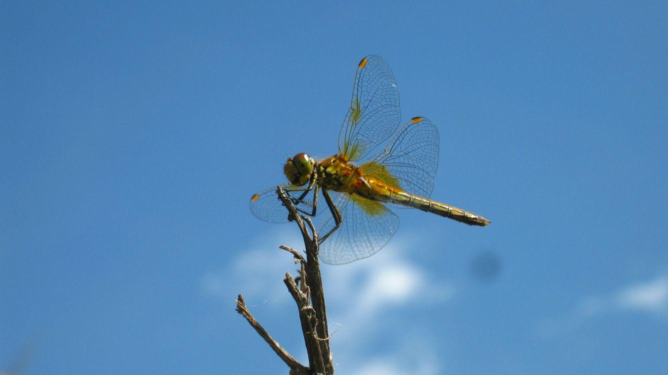 Фото бесплатно природа, насикомые, стрекоза, крылья, ветка, небо, разное