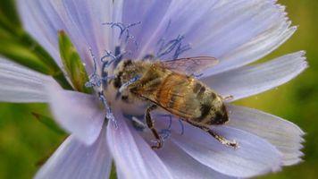 Бесплатные фото цветок, природа, лето, пчела, макро, насекомые, разное