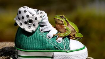 Photo free sneakers, frog, green