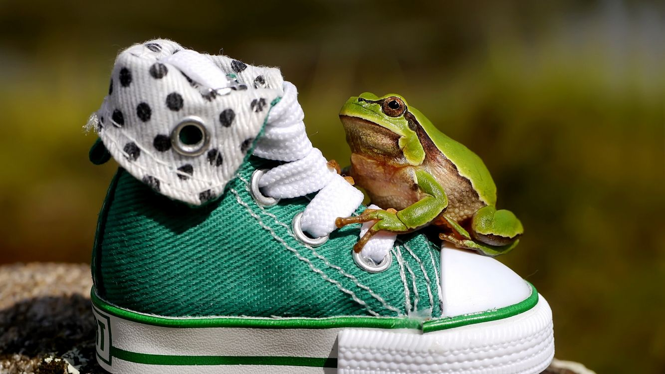 Photos for free sneakers, frog, green - to the desktop