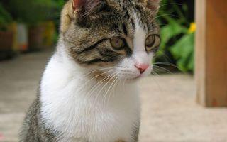 Бесплатные фото кошка,морда,глаза,усы,уши,шерсть,кошки