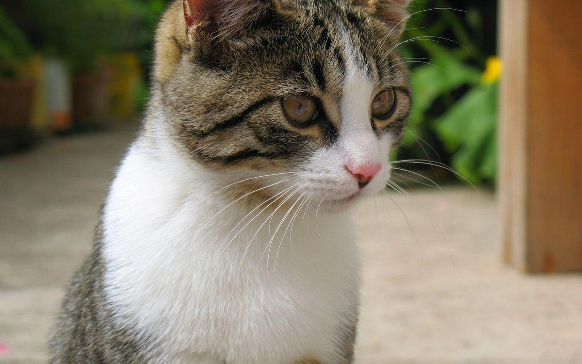 Фото бесплатно кот, уши, усы - на рабочий стол
