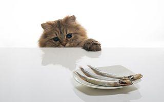 Бесплатные фото кот,пушистый,большие,глаза,стол,тарелка,рыба