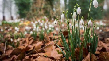 Бесплатные фото лепестки,бутоны,белые,стебель,листья,зеленые,цветы
