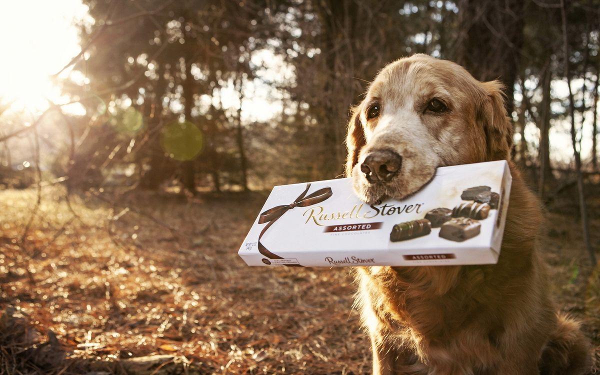 Фото бесплатно пес, ферма, деревья, пасть, коробка, конфет, russell stover, ситуации, собаки, собаки