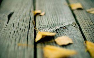 Заставки плахи, доски, дерево, листья, желтые, сухие, разное