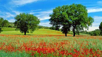 Бесплатные фото поле, деревья, цветы, пейзажи