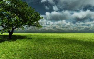 Бесплатные фото поле,трава,зеленая,дерево,крона,небо,тучки