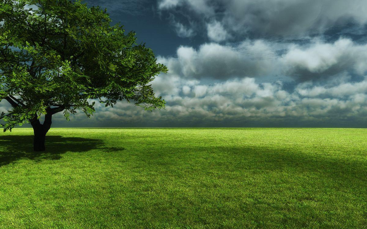 Фото бесплатно поле, трава, зеленая, дерево, крона, небо, тучки, пейзажи, пейзажи