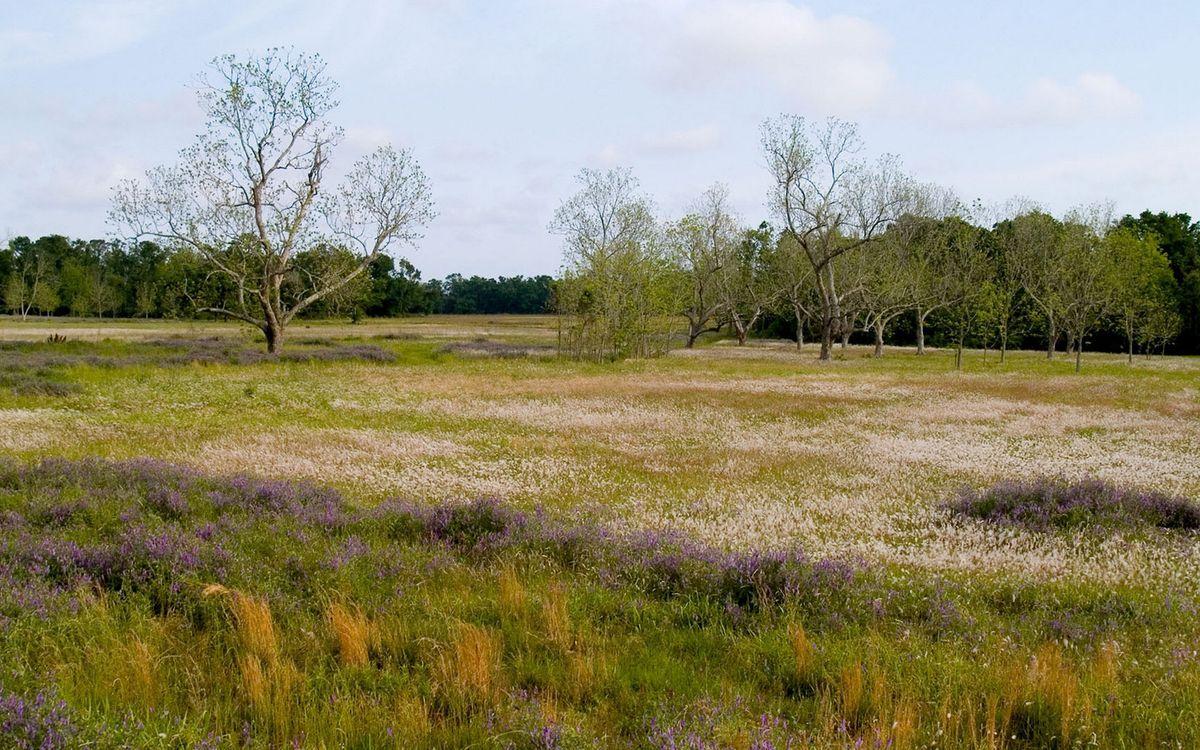 Картинка поле, трава, деревья, листья, ветки, ромашки, пейзажи, природа, цветы на рабочий стол. Скачать фото обои цветы