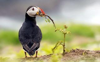 Фото бесплатно птица, перья, клюв