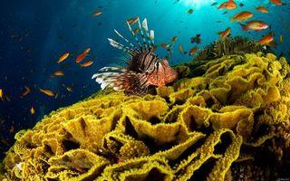 Бесплатные фото рыба, рыбка, вода, океан, море, кораллы, губка