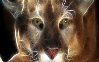Фото бесплатно собака, морда, глаза
