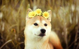 Бесплатные фото трава,цветы,ромашки,глаза,шерсть,поле,луг
