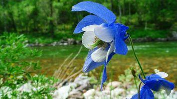 Бесплатные фото цветок,листья,лепестки,стебель,трава,камни,лес