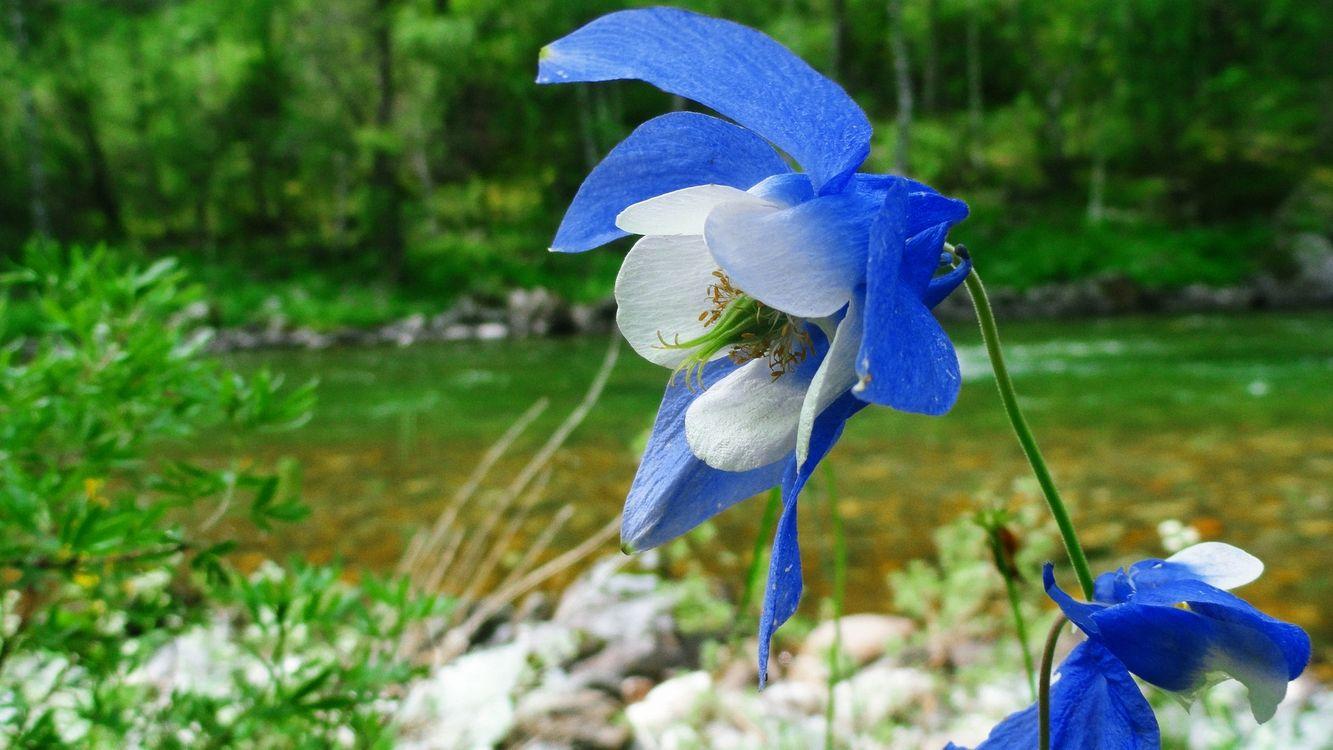 Фото бесплатно цветок, листья, лепестки, стебель, трава, камни, лес, деревья, ветки, зелень, цветы, цветы
