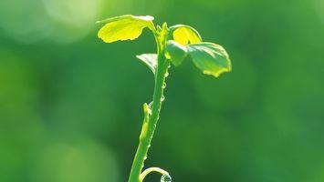 Фото бесплатно цветок, стебель, листья