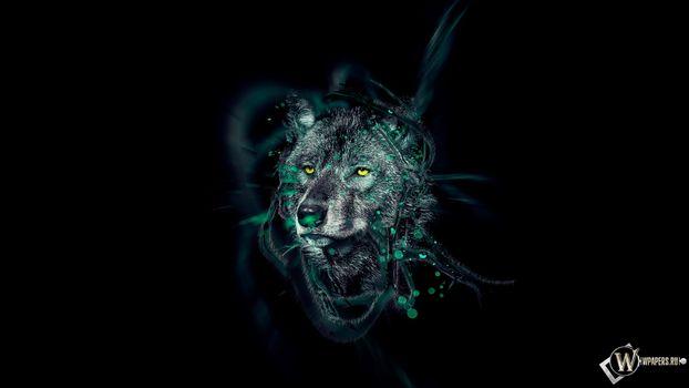 Бесплатные фото волк,wolf,животное,зверь,хищник,серый,абстракции